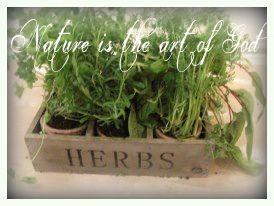 BeFunky_herbs.jpg-normal.jpg