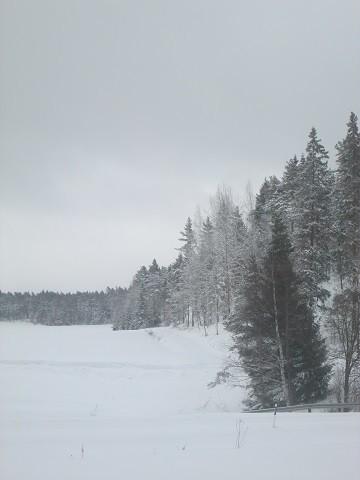 lumi1-normal.jpg