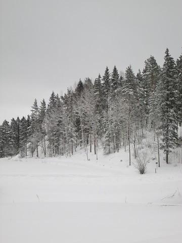 lumi2-normal.jpg