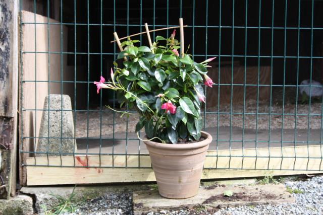 kukkaistutuksia%20004-normal.jpg