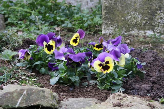 kukkaistutuksia%20005-normal.jpg