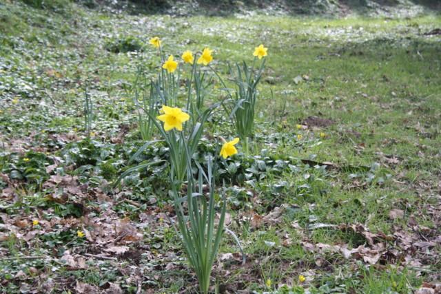 kukkaistutuksia%20011-normal.jpg