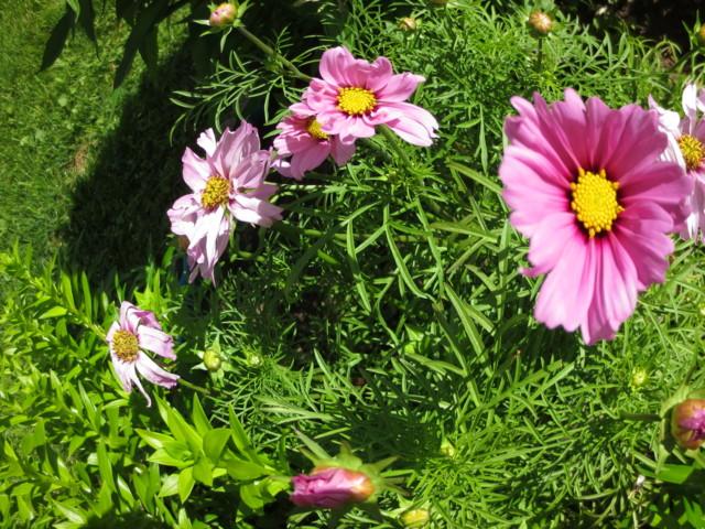 kukkia%20010-normal.jpg