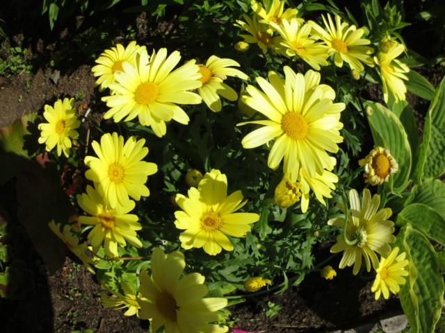 kukkia%20011-normal.jpg