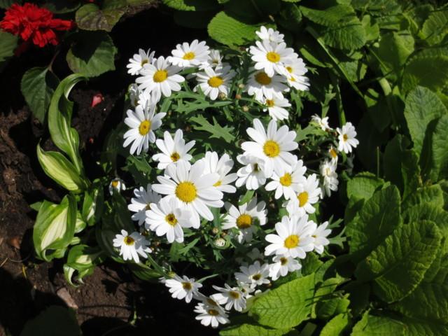 kukkia%20016-normal.jpg