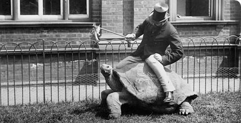 walter-rothschild-turtle-490_114832_1-no
