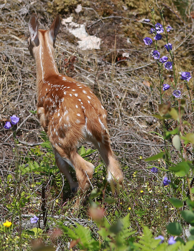 Bambi%2Clintuja%2Cperhosia%2Cpyjamalude%