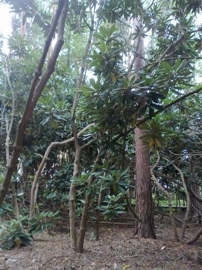 viidakko%20%282%29-normal.jpg