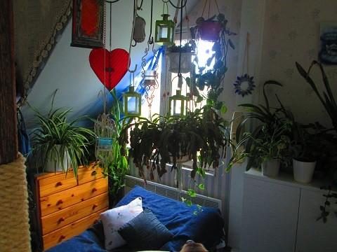 kasvit2-normal.jpg