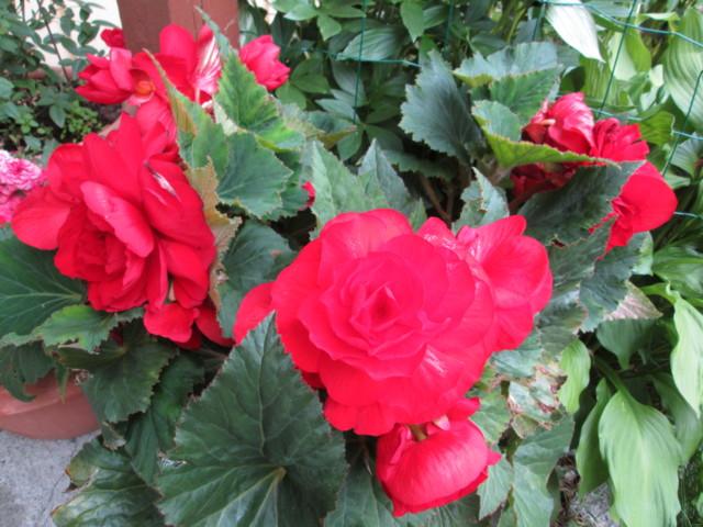 Kukkia%20004-normal.jpg