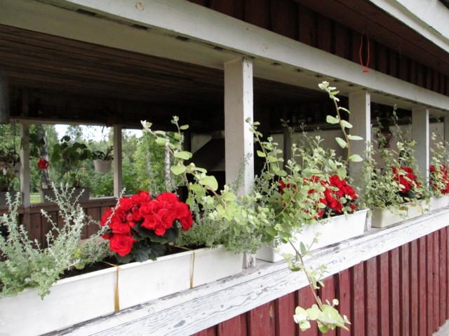 Kukkia%20005-normal.jpg