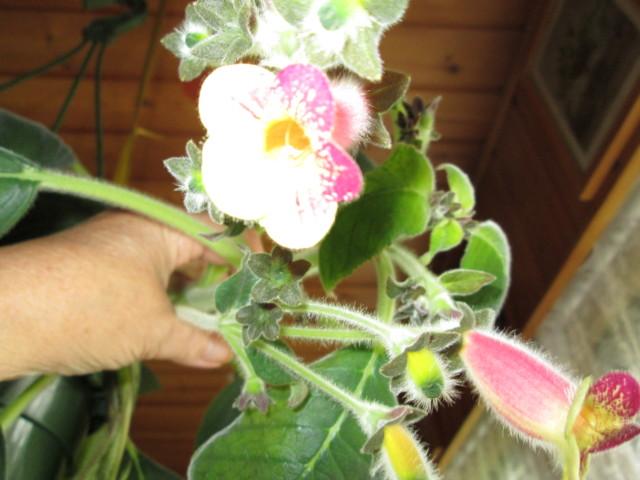 Kukkia%20019-normal.jpg