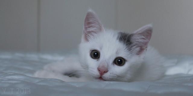 Kissa-normal.jpg