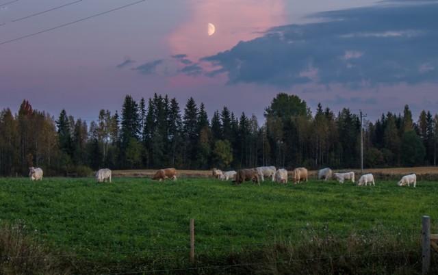 Karjaa%20kuutamolla-normal.jpg