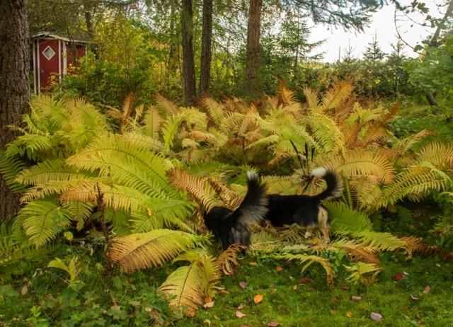viidakkoon-normal.jpg