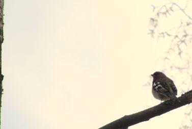 bird-normal.jpg