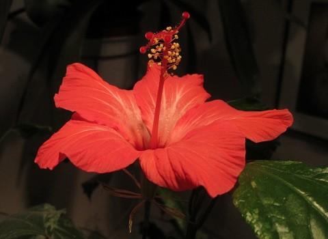 kukka1-normal.jpg