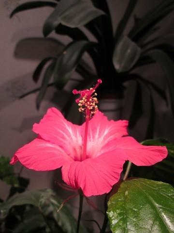 kukka2-normal.jpg