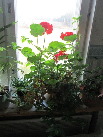 kukka5-normal.jpg