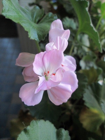 kukka8-normal.jpg