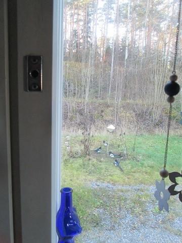 linnut1-normal.jpg