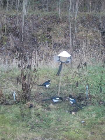 linnut2-normal.jpg