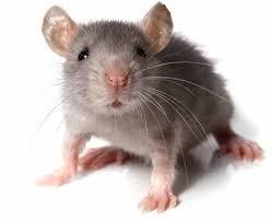 hiirula-normal.jpg