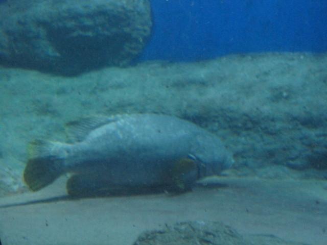 Akvaario%20004-normal.jpg