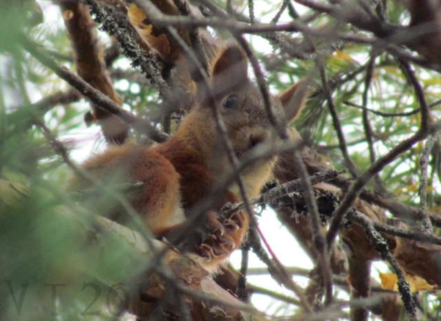 Orava%20nimi-normal.jpg