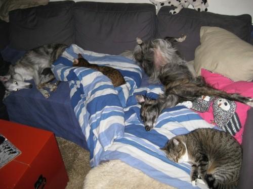 sohvalla-normal.jpg
