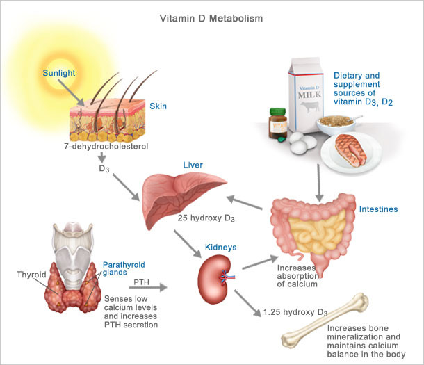 vitamin-d-metabolism-normal.jpg