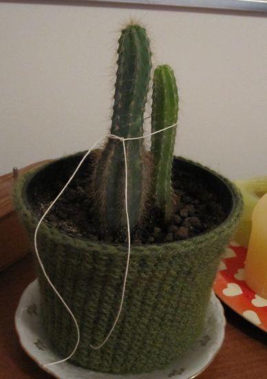 kaktusparka-normal.jpg