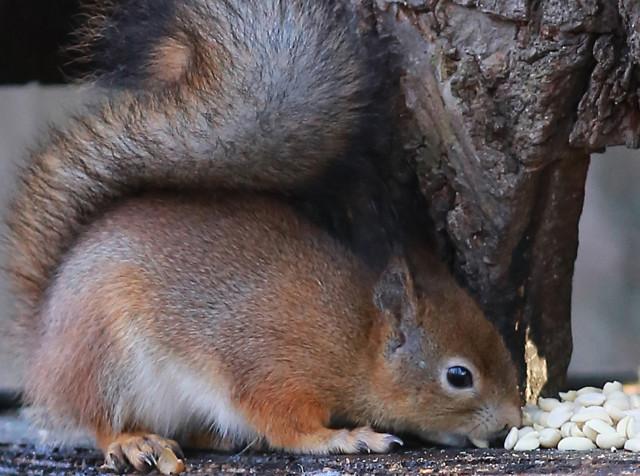 Orava%2C%20yl%C3%A4maan%20karjaa%2C%20vi