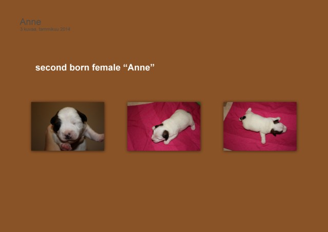 Anne0401-normal.jpg