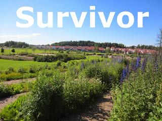 survivor-normal.jpg