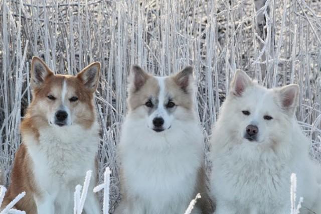 frost41-normal.jpg