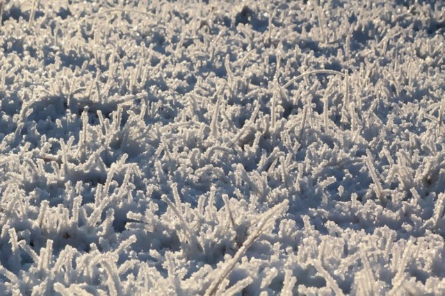 frost8-normal.jpg