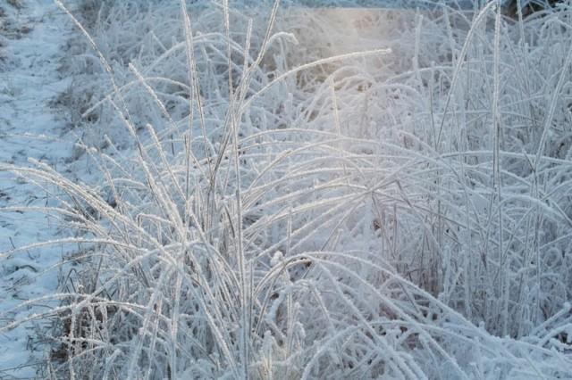 frost10-normal.jpg