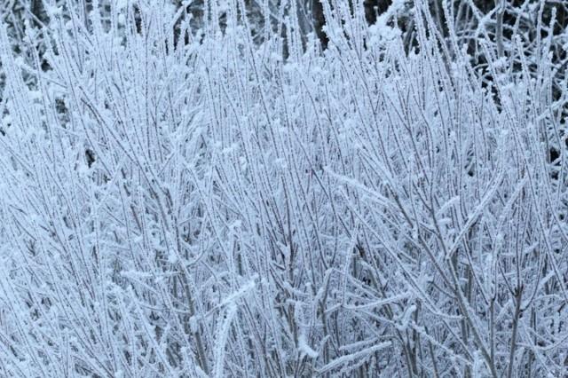 frost27-normal.jpg