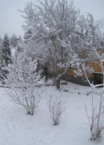 talvi-normal.jpg