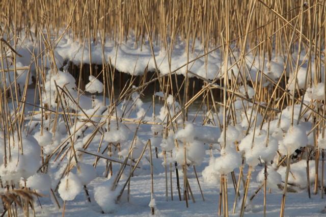 Talvipäivä 005.JPG