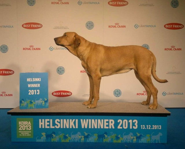 Hilu%20Helsinki%20Winner%2013-normal.jpg
