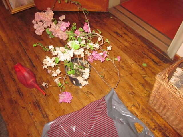 Kukka%20Tiinalle%202.2.14%20002-normal.j