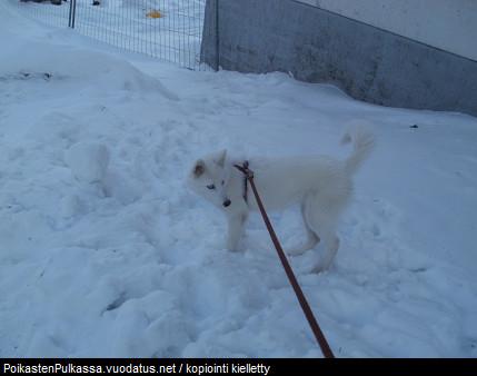 helmikuu2012_03-normal.jpg