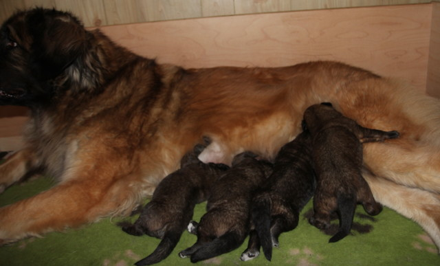 Thelma%20Hevi%20babies%2013pv%20007-norm