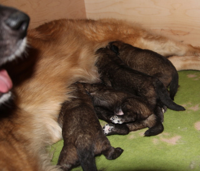 Thelma%20Hevi%20babies%2013pv%20006-norm