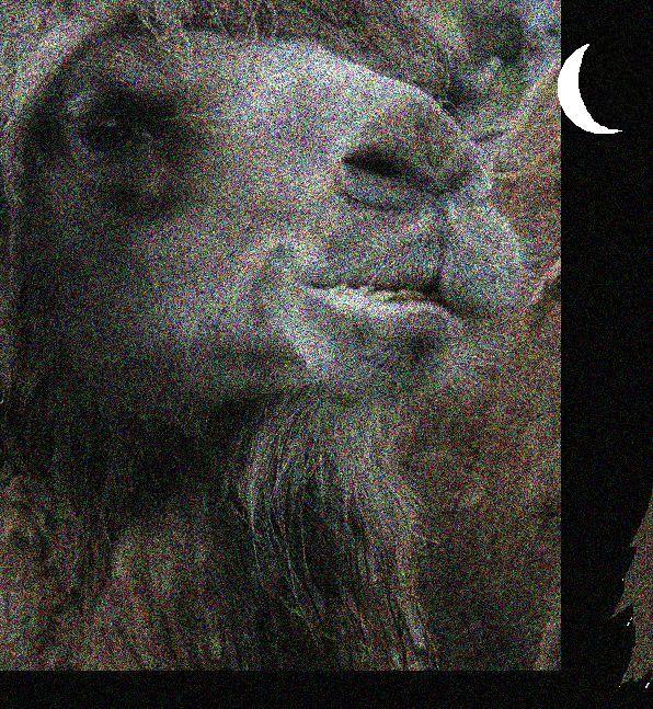 Kameli-normal.jpg