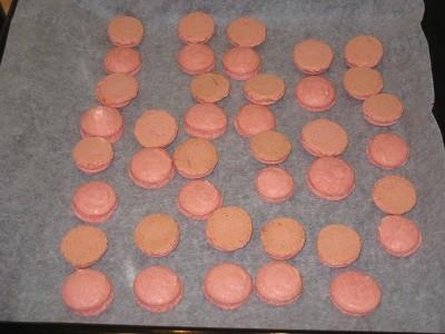 Macaronit%2C%20sly%20002pp-normal.jpg