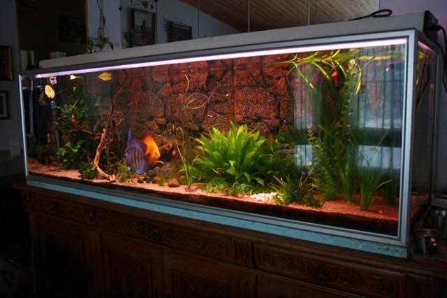 Akvaario_3-normal.jpg