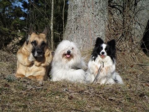 trio-normal.jpg